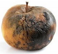 Old Rotten Apple